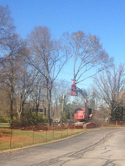 Removal of trees to make room for new construction