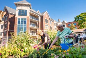Women gardening in the raised garden