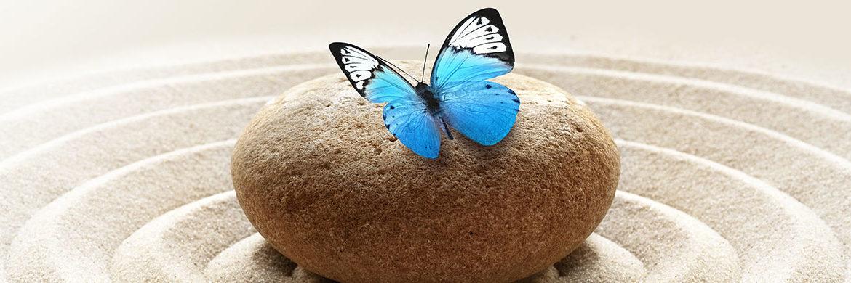 blue butterfly on rock in zen garden